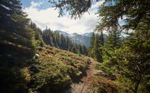 Hacklberg Trail